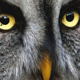 Nocturnia, evento divulgativo sobre aves rapaces nocturnas