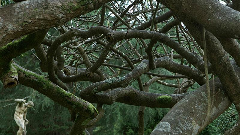 Una de las fotos de Estrella Sánchez del jardín de la Fundación Evaristo Valle
