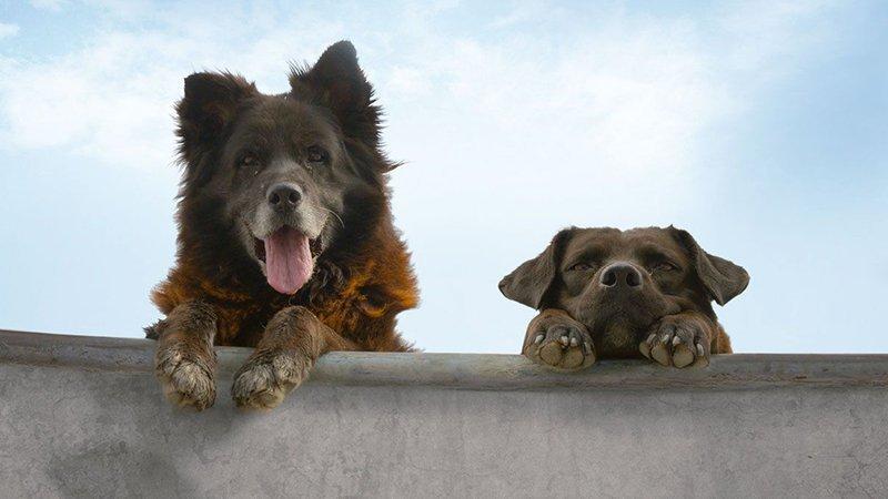 Detalle del cartel promocional del documental Los Reyes donde se ve a los dos perros protagonistas asomados al coping del bowl del skatepark con cara de majérrimos y con un precioso cielo azul de fondo