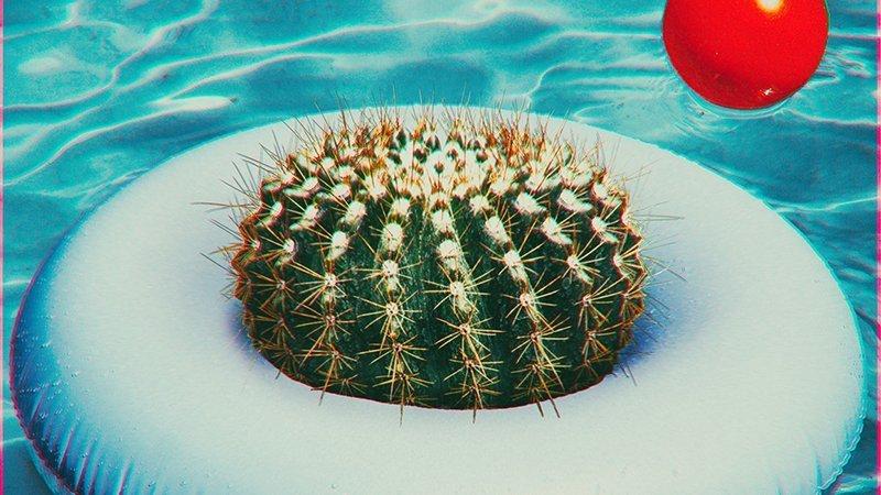 Detalle del cartel del concierto donde puede apreciarse una idílica imagen de un flotador blanco flotando en la superficie del agua de una piscina, con los clásicos reflejos del agua azul en un día soleado. Sobre el flotador se acomoda un cactus, con gesto de triunfador y, poco más atrás, flota junto a él una pelota roja.