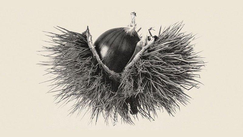 """Detalle del cartel de """"Un Señor Amagüestu"""" en el que se ve una foto en blanco y negro de una castaña saliendo de su zurrón."""