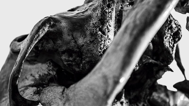 """Detalle de la portada del disco """"Invierno Totalitario"""" de A·L·M·A, en el que se ve una foto en blanco y negro, sobre fondo blanco, de un primerísimo plano, casi macro, de la estructura osea del craneo de un animal."""