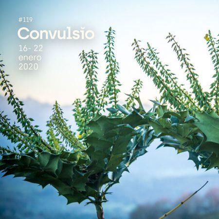 Contraportada de Convulsio con foto de dos pequeños arbustos sobre un horizonte azul desenfocado, tomada en el jardín de La Fuente la Lloba, el mejor restaurante japonés del entorno rural de Asturias, que en paz descanse.