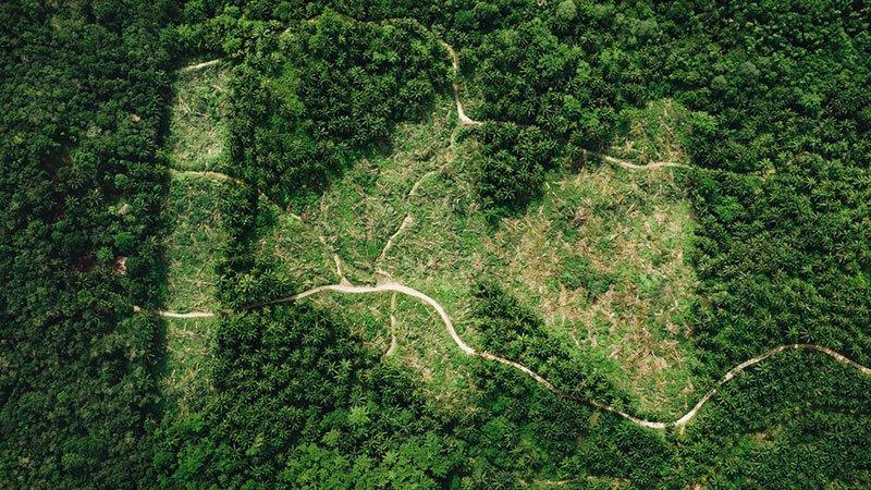 Fotograma del documental Rewild en el que se ve una vista aérea de una zona verde muy poblada de árboles, donde se ve una zona en la que los árboles están cortados definiendo la forma de una doble flecha apuntando hacia la izquierda a modo de símbolo de retroceder.