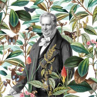 Ilusración de Humboldt rodeado de diversas ramas y hojas de diferentes especies botánicas.