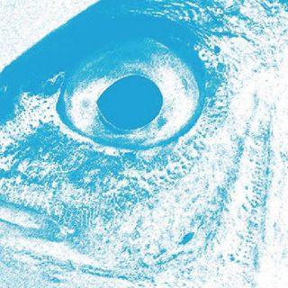 Foto primer planoo de un Muil con cara de serio y el color virado a azul.